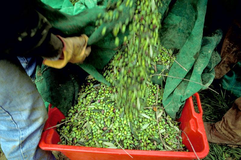 Olives08