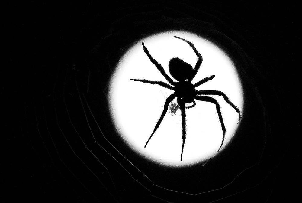 A spider is silhouetted against the full moon in October.