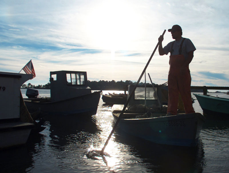 An oysterman is silhouetted against the sun as he maneuvers his boat close to the shore to unload the harvested shellfish in Apalachicola, Fla.