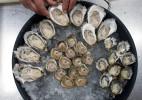 Oysters_Asst_Platter
