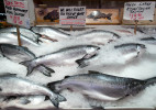 Salmon_Monger