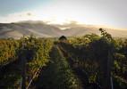 Wine_Les_Collines3