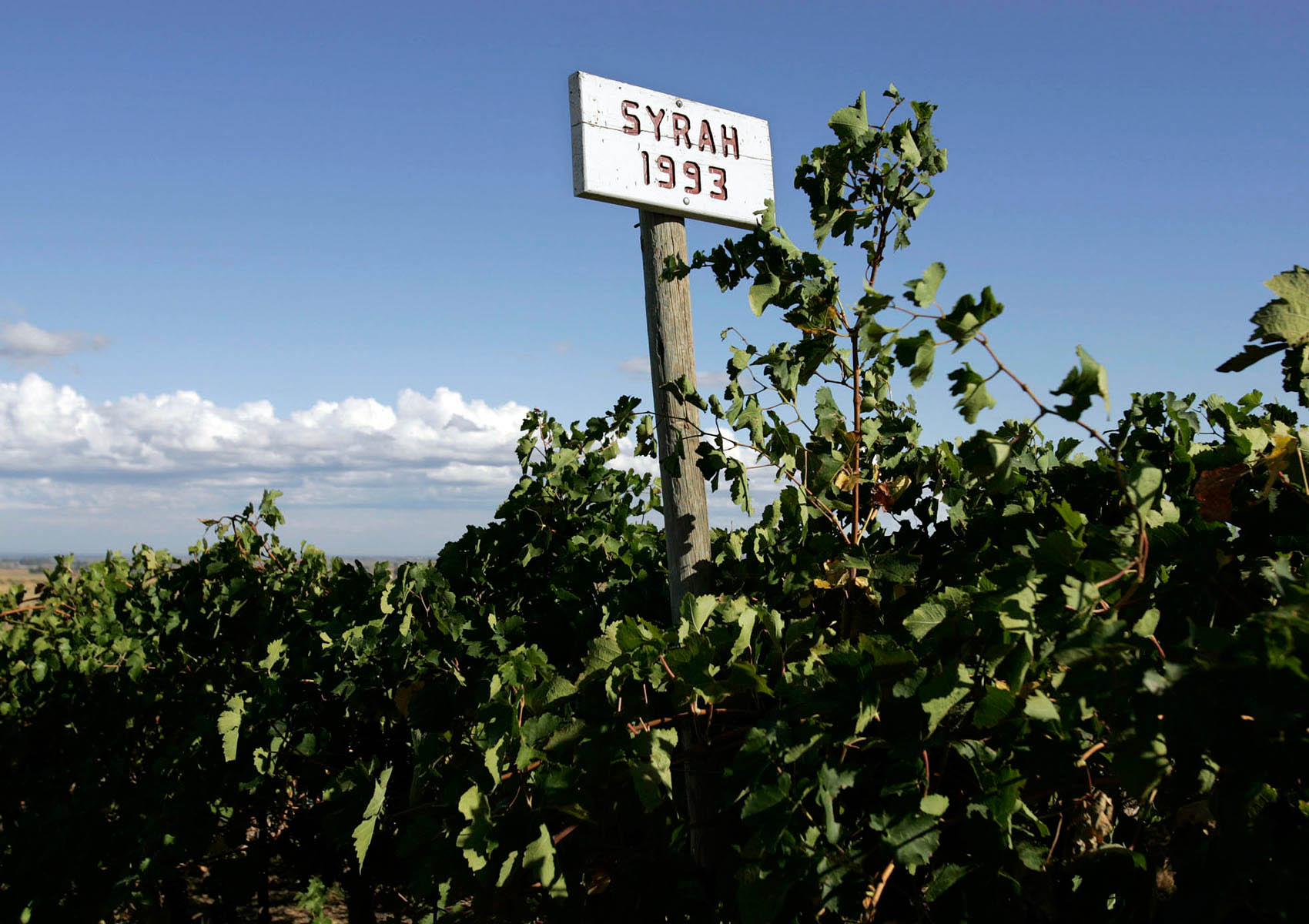 Wine_Syrah_Sign
