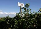 Wine_Syrah_Sign