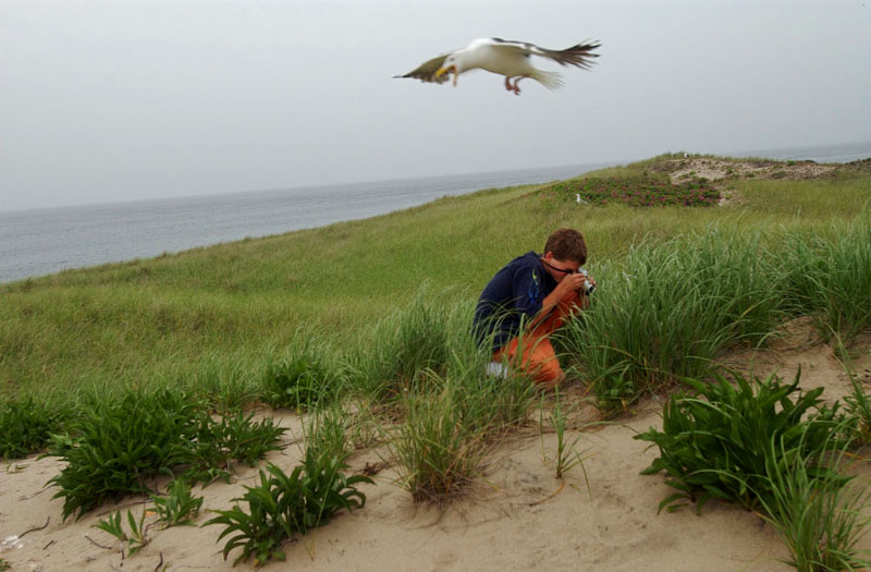 John Raithel, 15, has accompanied his father, wildlife biologist Chris Raithel, on the annual gull count since he was four-years-old. Raithel from the Department of Environmental Management's Division of Fish and Wildlife counts the gulls, which nest yearly in a protected area of Block Island's north end, for population estimates.