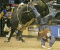Ned Cross, of Midland, Oregon, gets bucked from Jack Hammer during a re-ride at the sixth round of Professsional Bull Riders World Finals at Thomas & Mack Center Saturday, Nov. 3, 2007.