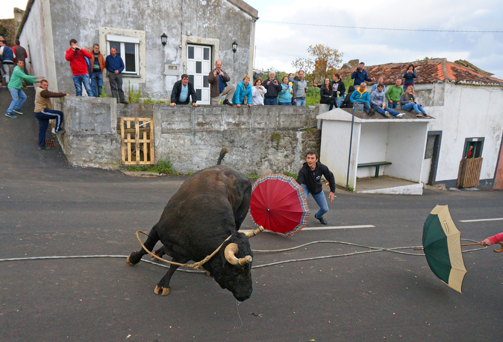 Local men entice a bull by flapping umbrellas during a neighborhood bullfighting show near Angra Do Heroismo on the Portuguese island of Terceira May 7, 2016.