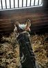 deo-valenti_farms-9984-frankveronsky
