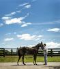 mike_gulotta_deo-volente_horse_farms_8-17-16-0049-frankveronsky