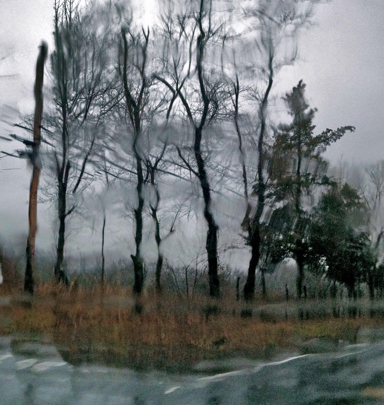 rainy-trees_5749