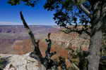 Grand Canyon. Jon Chase photo