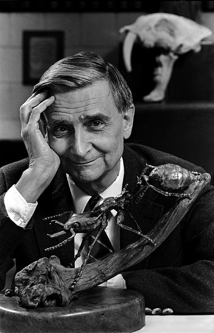 © 2010 Harvard University. Biologist E. O. Wilson, world reknown authority on ant life.
