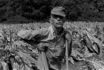 Tobacco hired hand, Jackson, Ky.