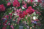 FlowerHall