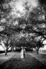 TreeTilt