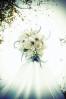 dressflowers