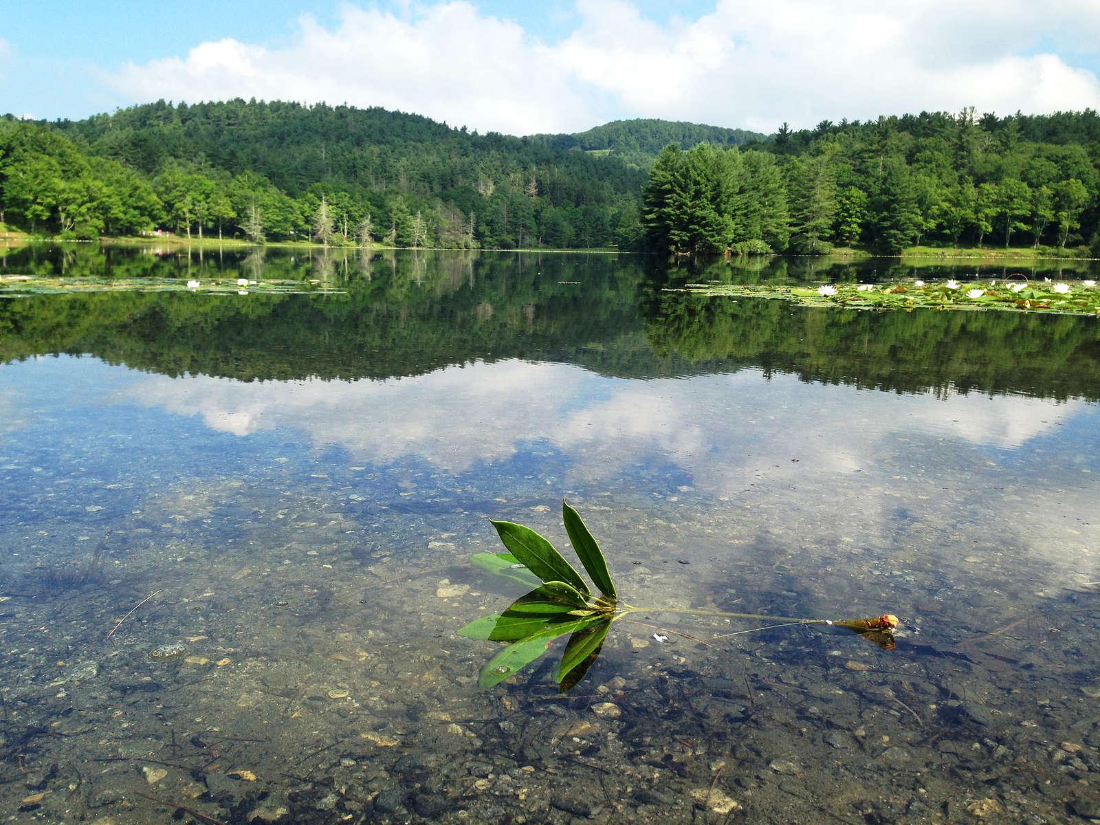 Bass-Lake-i-01
