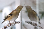 More_Birds_Snow_15_DA