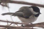 More_Snow_Birds_3-2013_23_DA