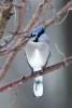 More_Snow_Birds_3-2013__08_DA