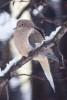 Snow_Birds_3-2013__07_DA