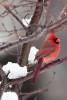 Snow_Birds_3-2013__18_DA