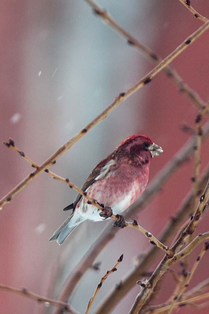 Snow_Birds_3-2013__21_DA
