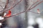 Snow_Birds_3-2013__24_DA