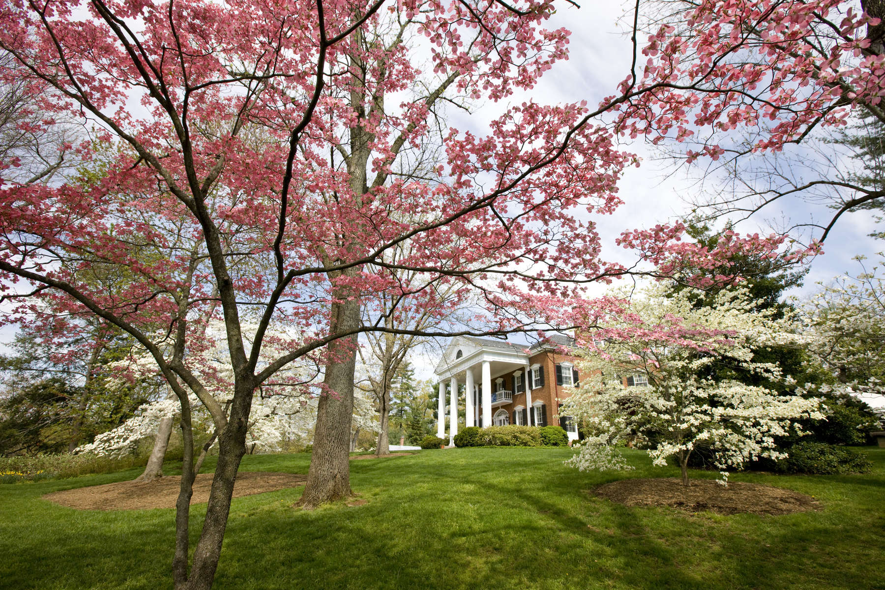 Spring_Carrs_Hill_08HR_DA