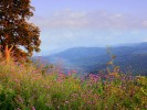 Bacon Hollow - Skyline Drive