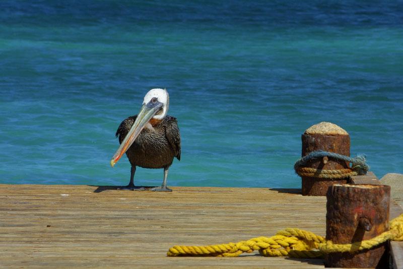 nat-Aruba-Wild-01