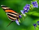 nat-Butterfly