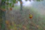 nat-Cold-Mt-Spider