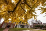 uva_Grounds_Nov_2012_09_DA