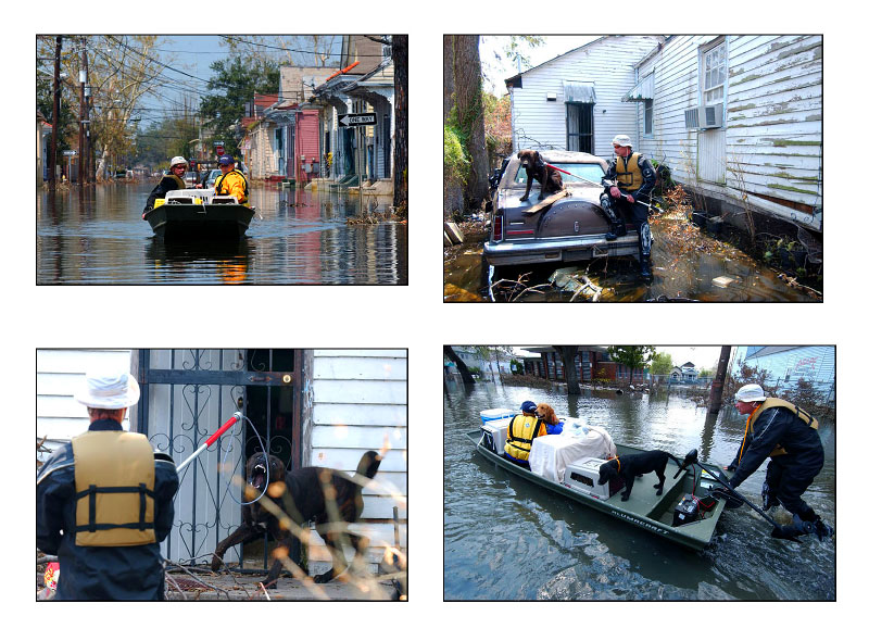 Boats were used to rescue the animals. One angry dog is calmed down before being transfered to the rescue centre.