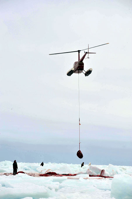 A helicopter is used to sling pelts