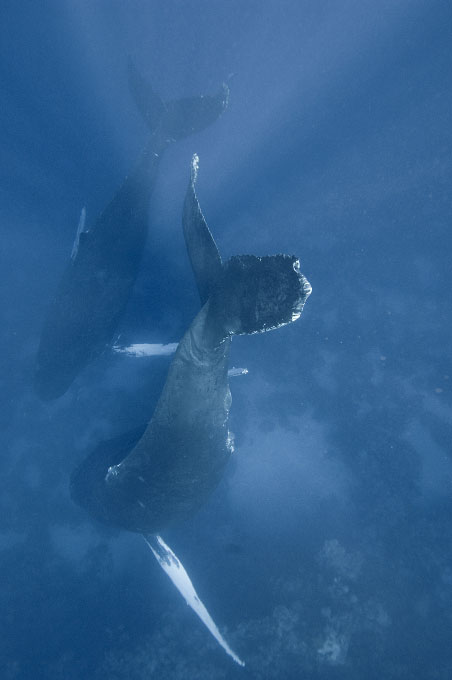 web-whale033