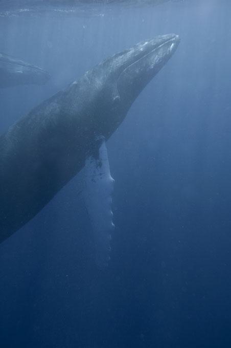 web-whale036