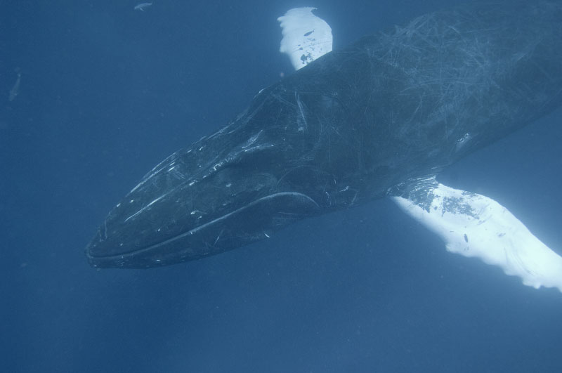 web-whale037