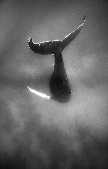 web-whale040