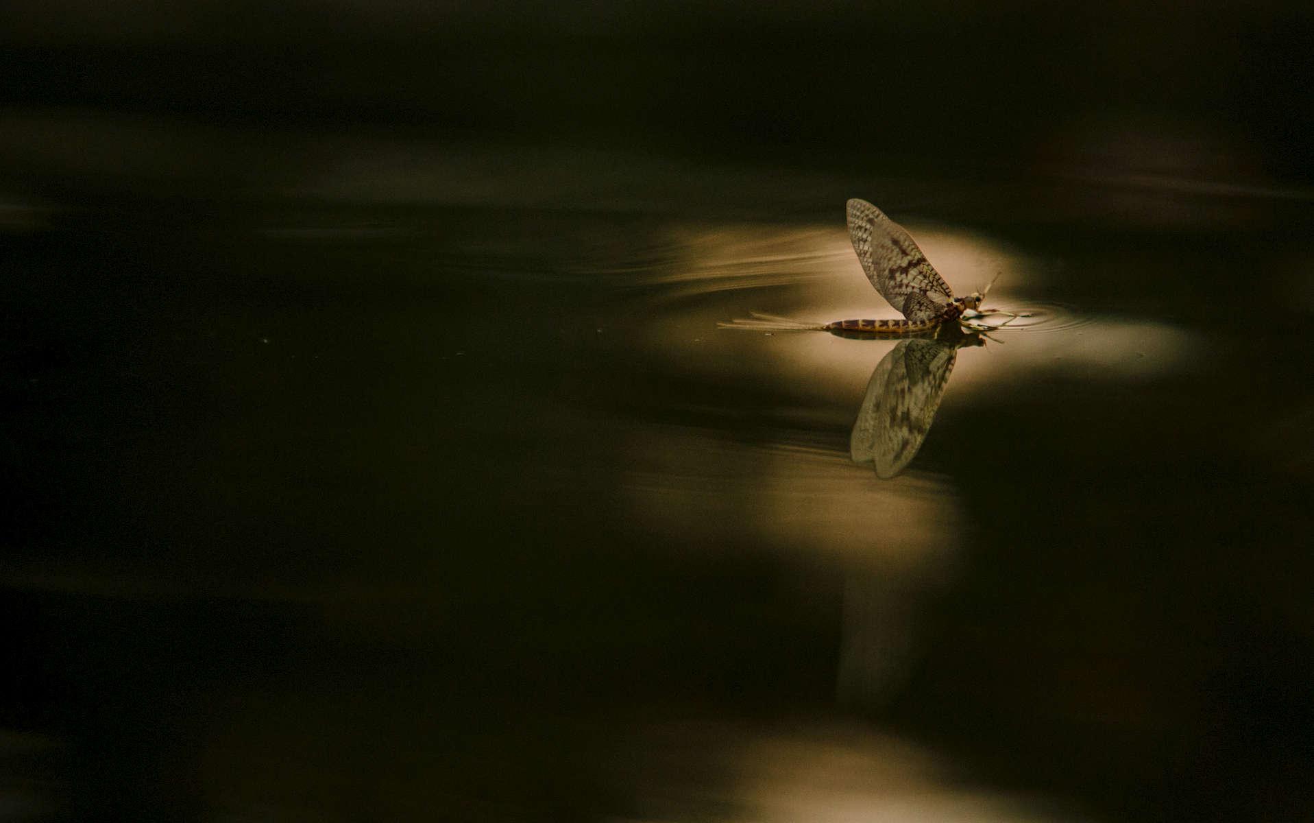 On The Fly Sam Dean Photography 15403097761 Virginia