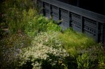 The High Line is located on Manhattan's West Side. It runs from Gansevoort Street in the Meatpacking District to 34th Street, between 10th & 11th Avenues. © mark menditto