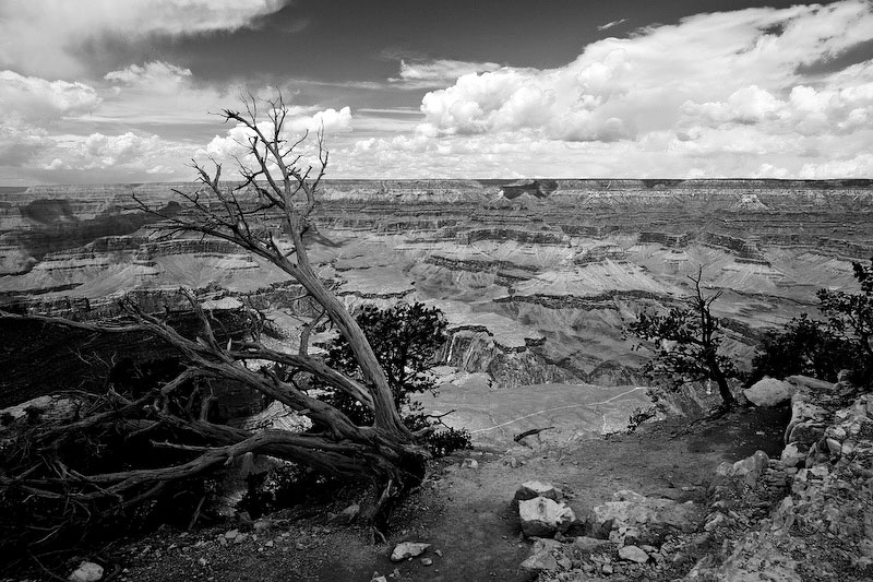 The broken tree in the foreground serves as a reminder that the canyon itself is just as fragile and speaks to the need for all of us to keep and preserve this great place for generations to come.