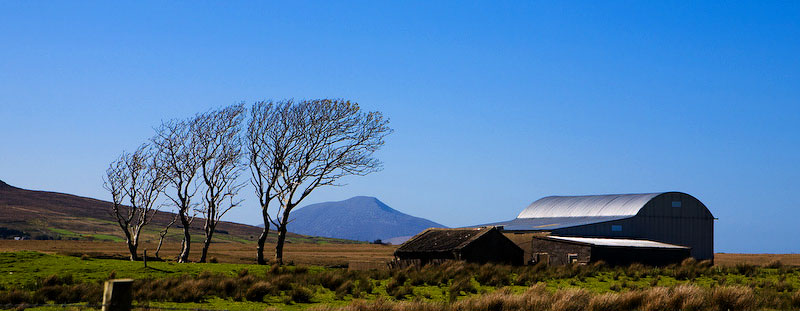 County Mayo, IrelandThe prevailing winds lend a beautiful shape to the trees on this farm located in a wide open peat bog.  The peak of Croagh Patrick can be seen in the distance.
