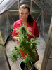 9/29/17--WAYLAND--  Renee Bolivar with a marijuana plant at her Wayland home. [Daily News and Wicked Local Staff Photo/Art Illman]