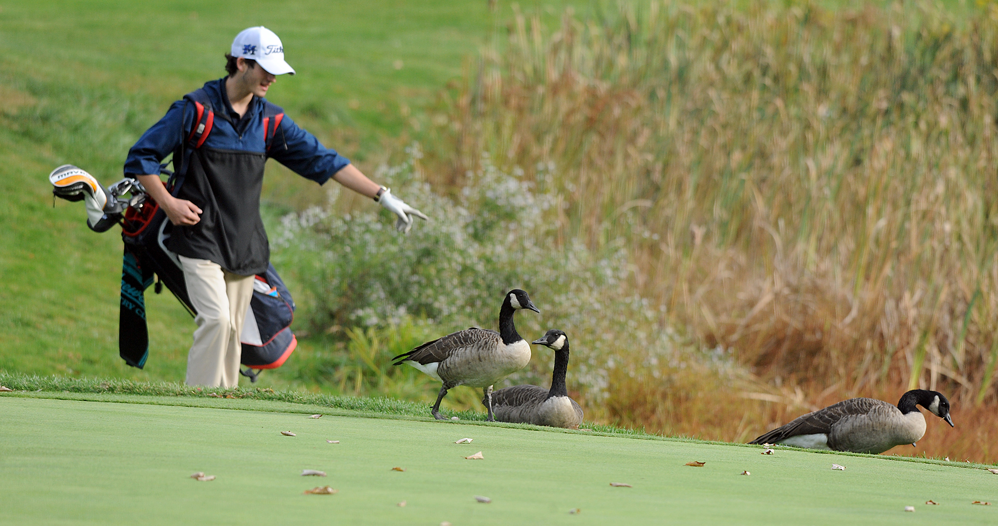 10/2/20 BELLINGHAM  -  Medway High School senior Jack McMullin points to his golf ball behind a few Canadian geese during a match against Bellingham at New England Country Club on Friday. [Daily News and Wicked Local Staff Photo/Art Illman]