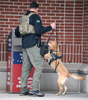 A State Police trooper and K9 sniff a ballot box at Natick Town Hall the morning of the running of the 125th Boston Marathon, Oct. 11, 2021.