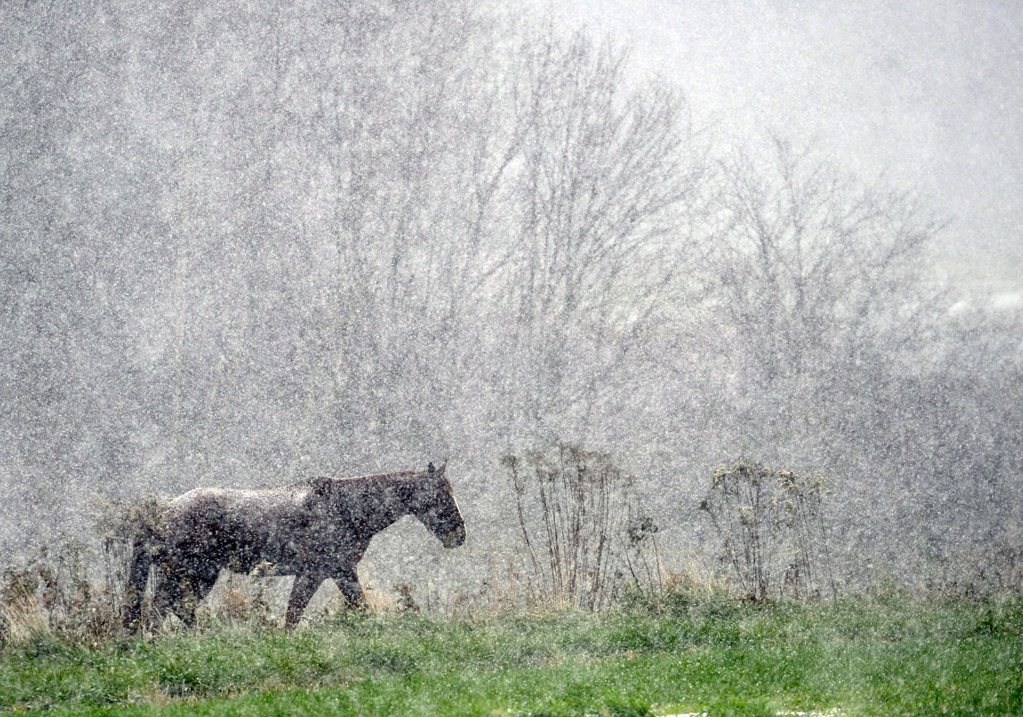 623754-MA_MW_snowhorse