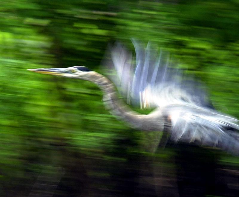 conc-sud-river-heron-blur