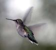 hummingbord2_050821
